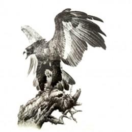 Obrie nalepovacie dočasné tetovanie na chrbát dravý vták, orol