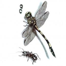 Jednorázové dočasné nalepovací tetování na lopatku, lýtko s motivem vážka, mravenec
